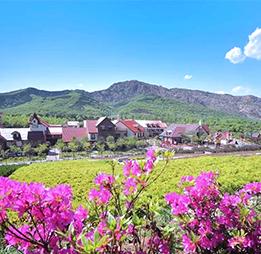 山東省青島藏馬山藍莓小鎮